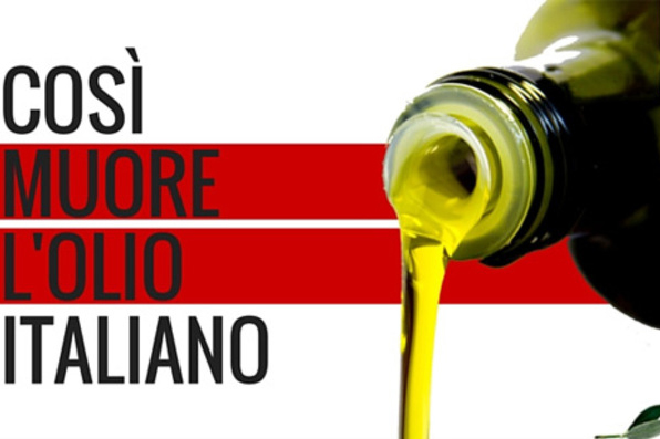 Podere le Melie dei Cavallini - Olio Extravergine di Oliva Toscano IGP
